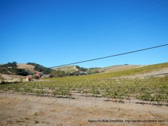 CA-46 W vineyards
