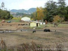 pig farm CA-128 W