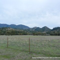 knights valley meadows