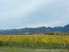 knights valley vineyard