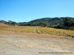 CA-46 vineyards