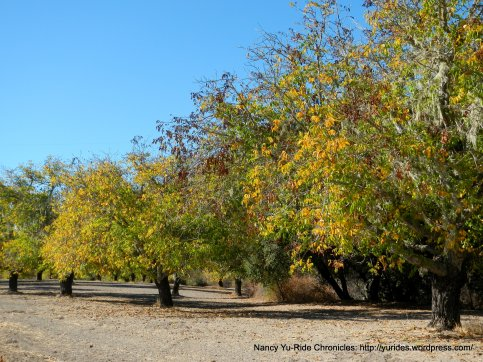 peachy canyon rd orchards