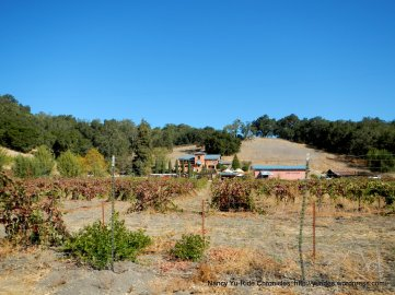 vineyard dr winery