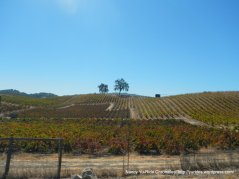 tablas creek vineyards