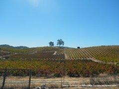 tablas creek vineyards