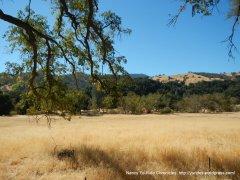 cypress mtn meadow