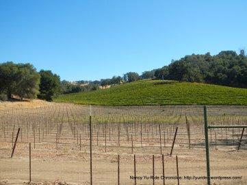 cypress mtn vineyards