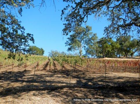 justin vineyards