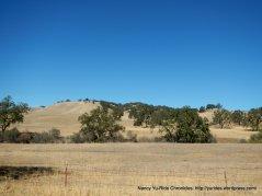 chimney rock meadow
