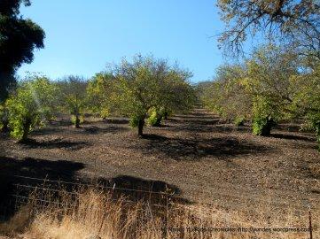 adelaida orchards