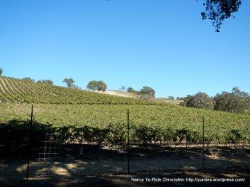 adelaida vineyards