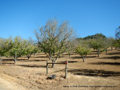 adelaida rd orchards