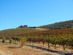 wild coyote vineyards