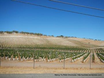 adelaida rd vineyards