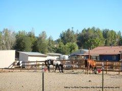 geneseo rd ranch
