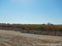 camp 8 rd vineyards
