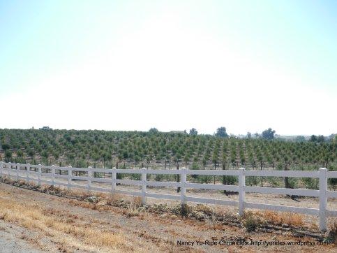 camp 8 rd olive farm
