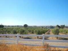 camp 8 rd olive grove
