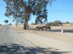 CA-41 S ranch