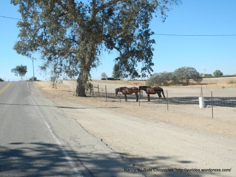 CA-41 S ranch