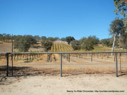 linne rd wine trail