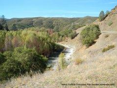 riparian landscape