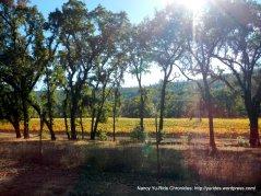 chiles valley vineyards