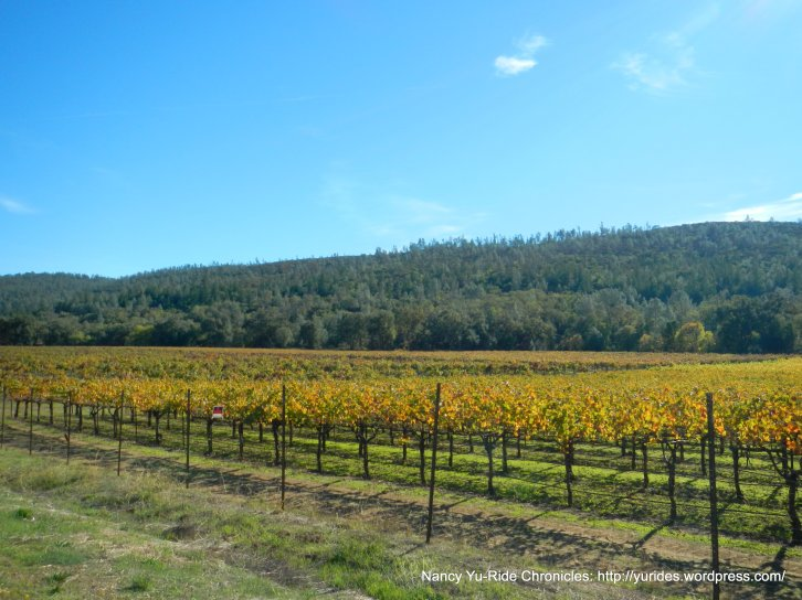 chiles valley vineyards