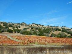 upper valley vineyards