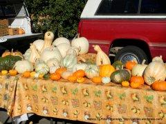farmers market squashes