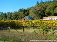 westside rd-russian river valley