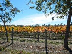 shiloh rd vineyards