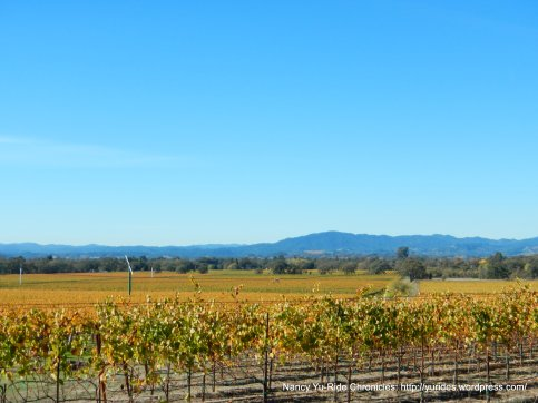 faught rd vineyards