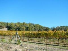 chalk hill vineyards