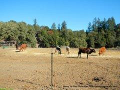 chalk hill ranch