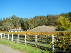 chalk hill vineyards