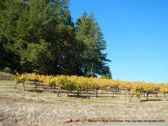 chalk hill vines