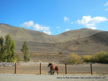 collier canyon horse ranch