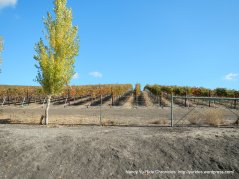 doolan rd vineyard