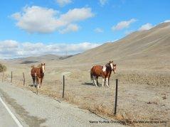 doolan canyon horses