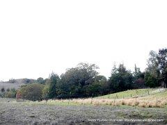 forest farm sheep