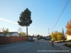 sequoia dr