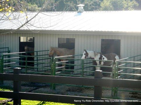 las trampas stables