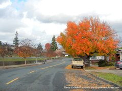fall colors-fig tree ln