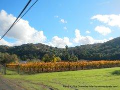 franklin canyon vineyard