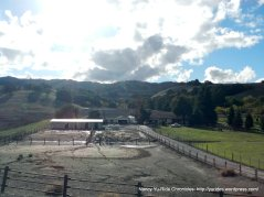 reliez valley horse ranches