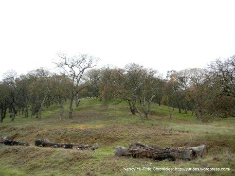shell ridge landscape