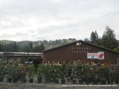 sycamore valley nursery