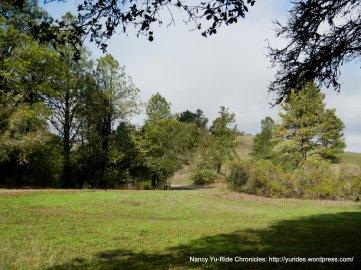tilden landscape meadow