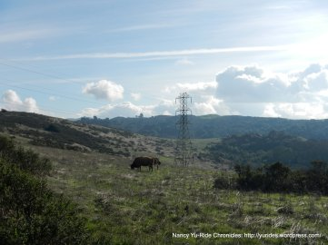 pastoral meadows